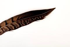 Piuma dell'uccello, fondo bianco Fotografia Stock
