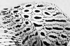 Piuma della gallina faraona Fotografie Stock