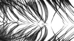 Piuma della gallina faraona Fotografia Stock