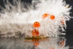 Piuma della gallina faraona con le gocce di acqua arancio Immagine Stock Libera da Diritti