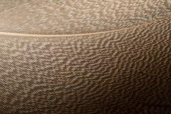 Piuma di Brown Fotografia Stock