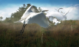 piuma di uccelli Immagine Stock Libera da Diritti