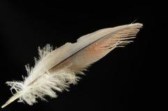 Piuma di uccello Immagine Stock