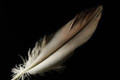 Piuma di uccello Fotografie Stock