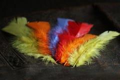 Piuma di uccello bassa variopinta fotografie stock