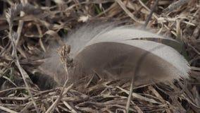 Piuma di uccello che ondeggia nel primo piano del vento stock footage