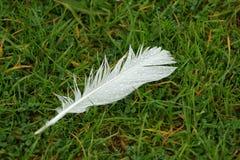 Piuma di uccello con le gocce di pioggia immagine stock libera da diritti
