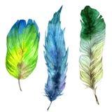 Piuma di uccello dell'acquerello dall'ala isolata Fotografia Stock Libera da Diritti