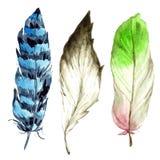 Piuma di uccello dell'acquerello dall'ala isolata Fotografie Stock Libere da Diritti