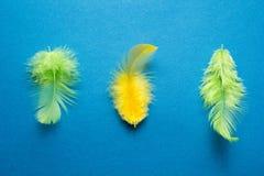 Piuma di uccello verde e gialla su un fondo blu immagine stock