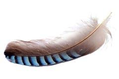 Piuma di un uccello immagini stock libere da diritti
