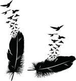 Piuma di un uccello Fotografie Stock