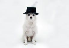 Piuma in mio cappello Fotografie Stock