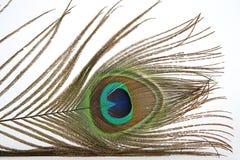 Piuma multicolore Fotografia Stock Libera da Diritti