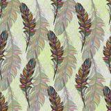 Piuma multicolore, isolato Con fondo bianco Fotografia Stock Libera da Diritti