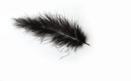 Piuma nera del marabù su un fondo bianco Immagini Stock