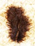 Piuma nera strutturata Fotografie Stock