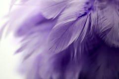 Piuma porpora del primo piano, piume multicolori, textur del fondo Immagine Stock