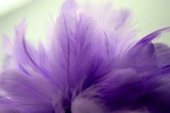 Piuma porpora del primo piano, piume multicolori, textur del fondo Fotografia Stock Libera da Diritti