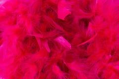 Piuma rosa Fotografie Stock Libere da Diritti