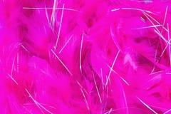 Piuma rosa Fotografia Stock