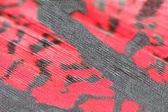 Piuma rossa del fagiano, macro Fotografie Stock Libere da Diritti