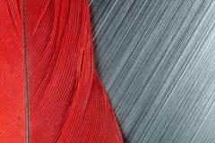 Piuma rossa ed estratto spazzolato del metallo Immagini Stock Libere da Diritti