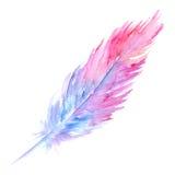 Piuma rustica dell'uccello blu porpora rosa dell'acquerello isolata Fotografia Stock Libera da Diritti