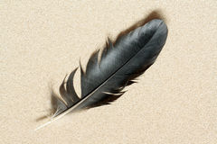 Piuma sulla sabbia Fotografia Stock Libera da Diritti