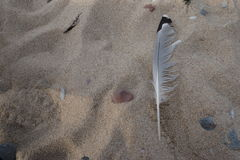 Piuma sulla sabbia Fotografie Stock