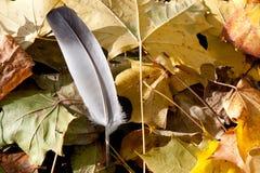 Piuma sulle foglie Fotografia Stock Libera da Diritti