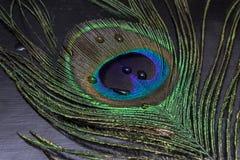 Piuma variopinta del pavone Fotografie Stock Libere da Diritti