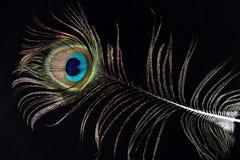 Piuma variopinta del pavone sul nero fotografia stock libera da diritti