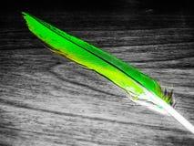 Piuma verde immagine stock