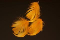 Piume arancioni su priorità bassa nera Fotografia Stock Libera da Diritti