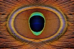 Piume astratte del pavone Fotografie Stock Libere da Diritti