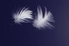 Piume bianche che galleggiano sul blu Fotografie Stock Libere da Diritti