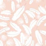 Piume bianche del reticolo senza giunte Fotografie Stock