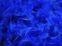 Piume blu Fotografia Stock Libera da Diritti