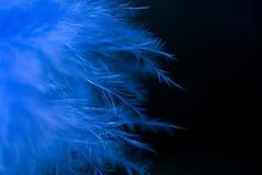 Piume blu Immagine Stock