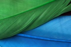 Piume blu e verdi fotografie stock