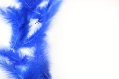 Piume blu luminose su un fondo bianco Fotografia Stock