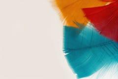 Piume colorate Fotografie Stock Libere da Diritti