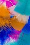 Piume colorate Immagini Stock