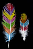Piume colorate su fondo nero Fotografia Stock Libera da Diritti
