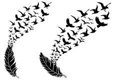 Piume con gli uccelli di volo, vettore