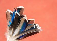 Piume del blu dell'anatra Fotografie Stock