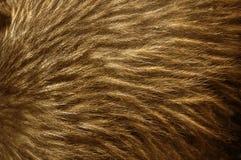 Piume del kiwi fotografia stock