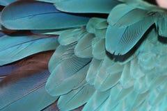 Piume del pappagallo Immagini Stock
