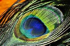 Piume del pavone Fotografie Stock Libere da Diritti